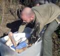 Cel mai probabil la Isaccea, Ambulatoriu pentru păsările şi animalele din Delta Dunării
