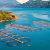 Inițiativă legislativă  privind aprobarea Programului de susținere a producătorilor din sectorul pescuitului și acvaculturii