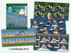 fauna_pelicani_M